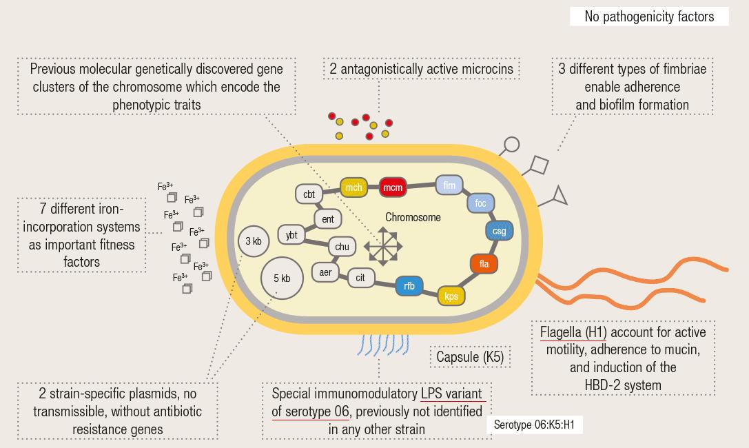 E coli bacteria diagram basic guide wiring diagram molecular mechanisms of action rh mutaflor com e coli bacteria labelled diagram e coli bacteria labelled diagram ccuart Images